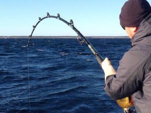 Giant Bluefin Tuna Rod And Reel